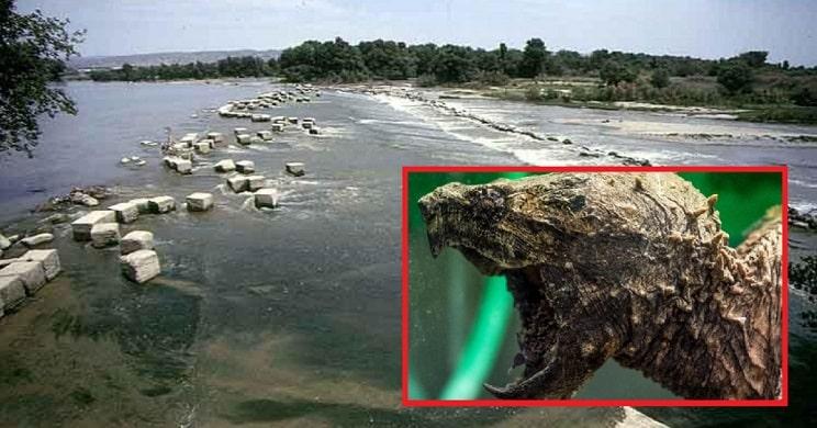 ¡Alerta pescadores! se busca a esta tortuga mordedora en el Ebro