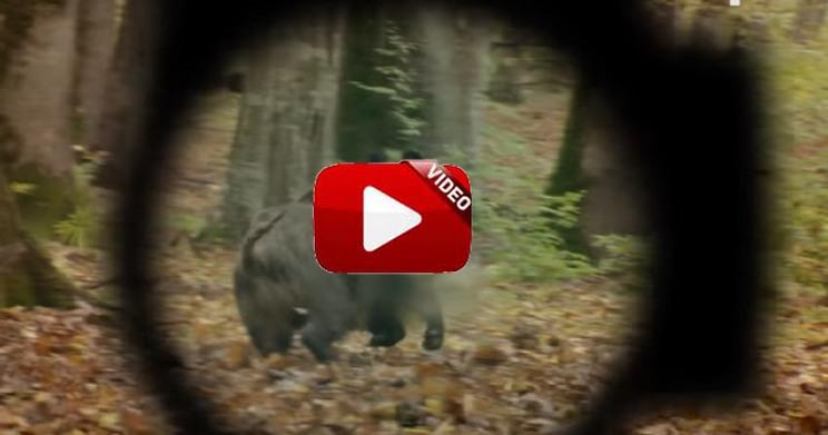 La última entrega de Wild Boar Fever va a ponerte el corazón a mil por hora