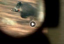 treintena lances jabalies y zorros