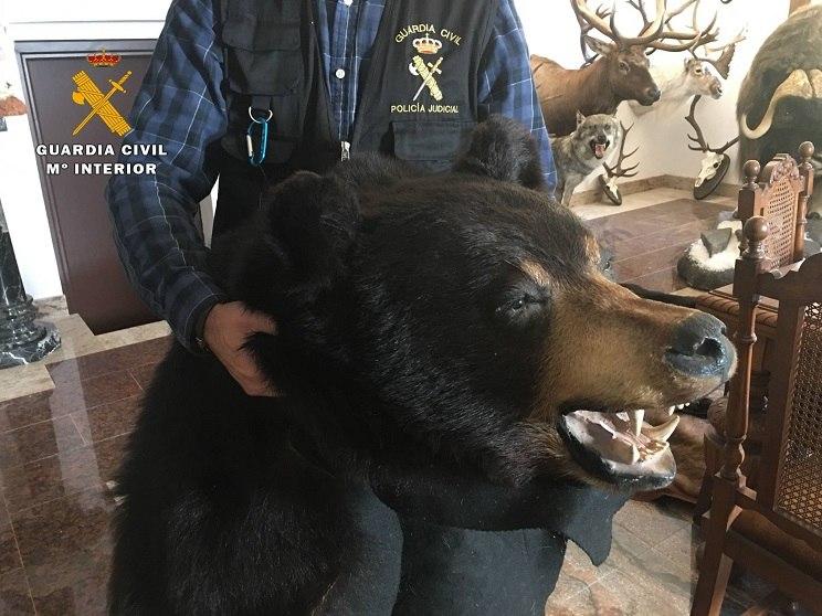 Uno de los trofeos de oso incautados a los ladrones. / Guardia Civil