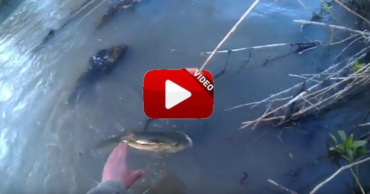 Captura una trucha con vinilo y un anzuelo sin arpón en aguas castellanoleonesas