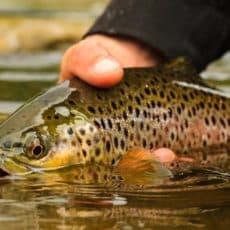Los pescadores podrán prorrogar los permisos de pesca que ya han pagado en Castilla y León