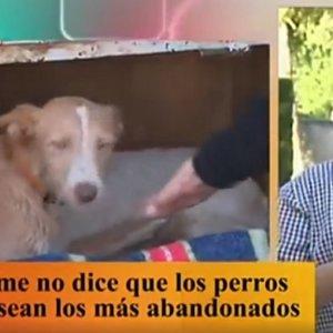 TVE rectifica, pide perdón y asegura que los perros de caza no son los más abandonados