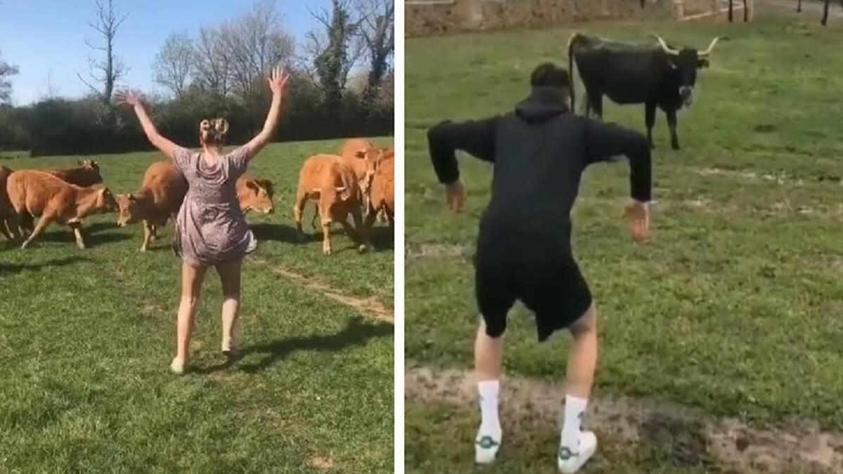 Grabarse asustando vacas: el último y peligroso reto de TikTok que denuncian los ganaderos
