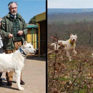 El Valdueza ya es raza pura canina española. Así es este perro de caza