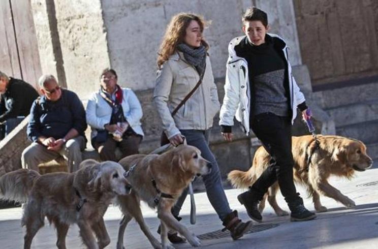 Los animalistas quieren que los valencianos paguen impuestos por tener perros