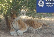 vecino murcia llama policia tigre