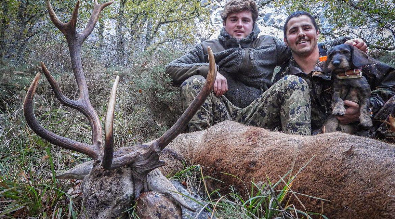 Caza un viejo ciervo con una extraña cuerna en Palencia