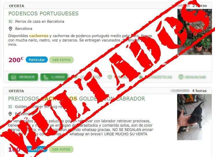 Multan con 150.000 euros a 'Mil Anuncios' y 'Vibbo' por venta ilícita de perros