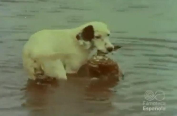 Este antiguo vídeo de caza de acuáticas te va a emocionar