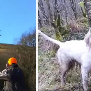 Este vídeo de becadas explica por qué su caza es capaz de enamorar a cualquiera