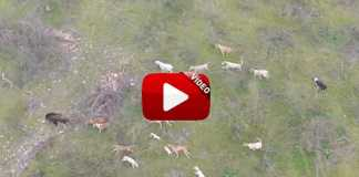 video-homenaje-rehalas-cazadores