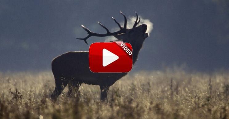 Vive Cabañeros, el documental sobre el paraíso del ciervo ibérico