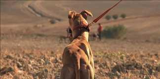 Los cazadores furtivos aumentan en Novés / Fotografía: Dclm.es