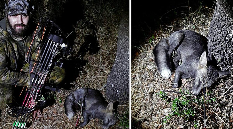 Un joven caza con arco un peculiar zorro negro y lo graba en vídeo
