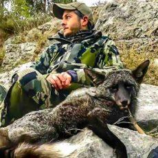 Caza un extraño zorro negro durante un rececho de arruí en Murcia