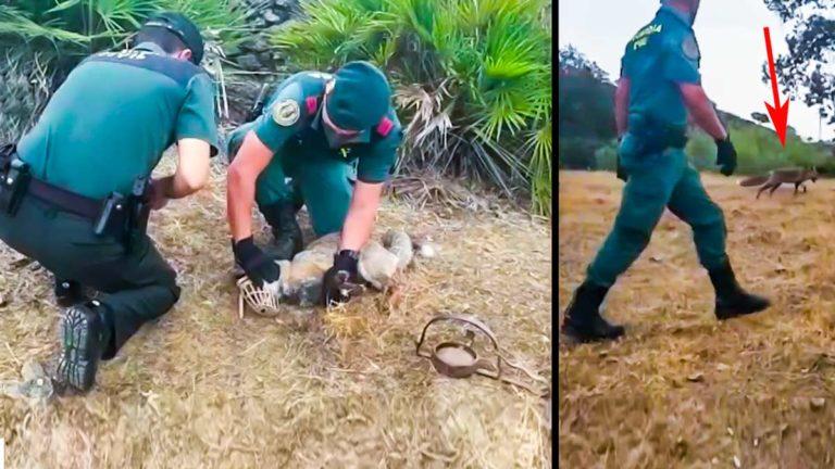 Los agentes del Seprona con el zorro. @Guardia Civil
