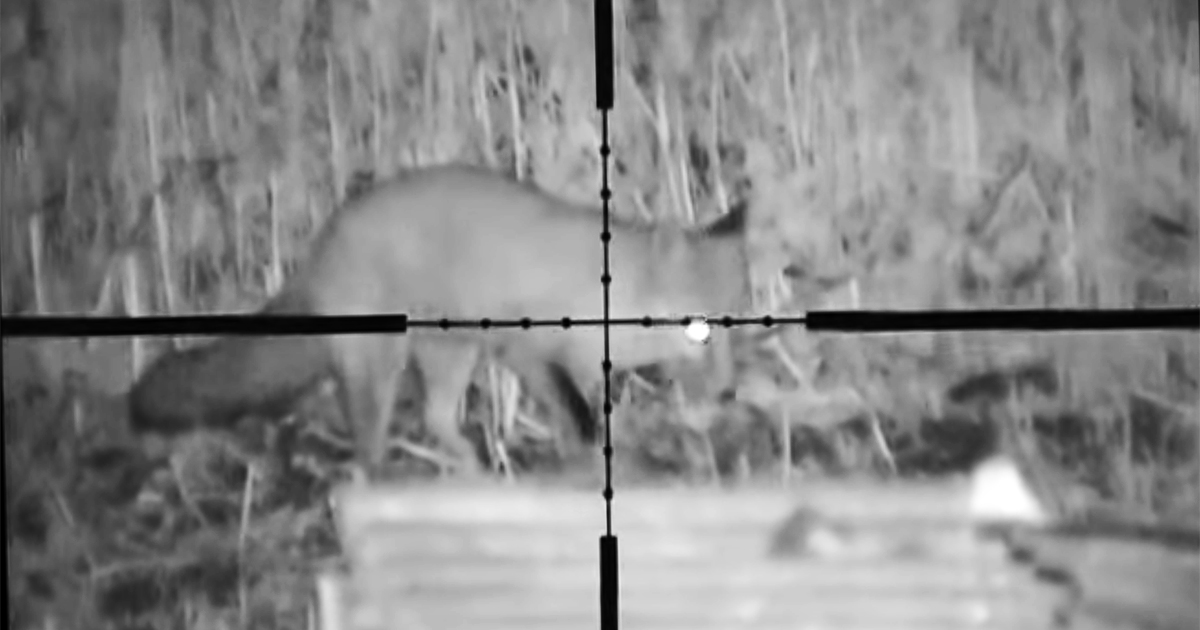 ¿Es legal cazar con visión nocturna en mi comunidad?