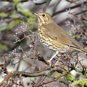 Nuevo ataque a la caza de pájaros con liga de la ministra de Transición Ecológica en Francia
