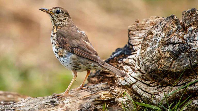 El silvestrismo y el parany deberían ser legales en España. ©Shutterstock